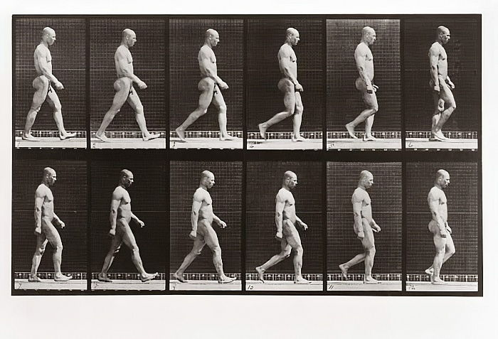 Homem, andar, prato, 6, animal, locomotion, 1887, (photograph) de Eadweard Muybridge